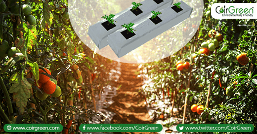 Using coir growbags for growing vegetables