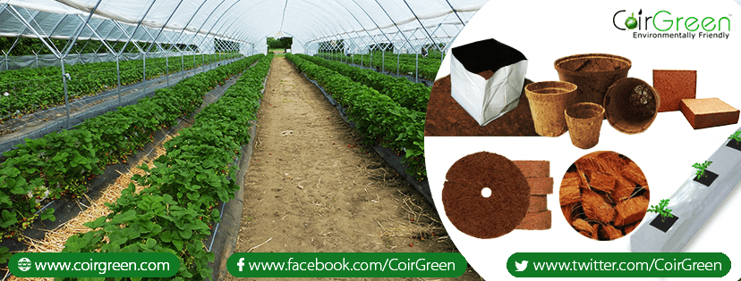 Coir products as a growing medium