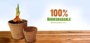 Coir Pots (coco pots): Why move from Plastic Pots?