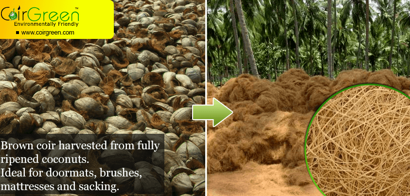 From the coconut tree to your garden: The coir manufacturing process