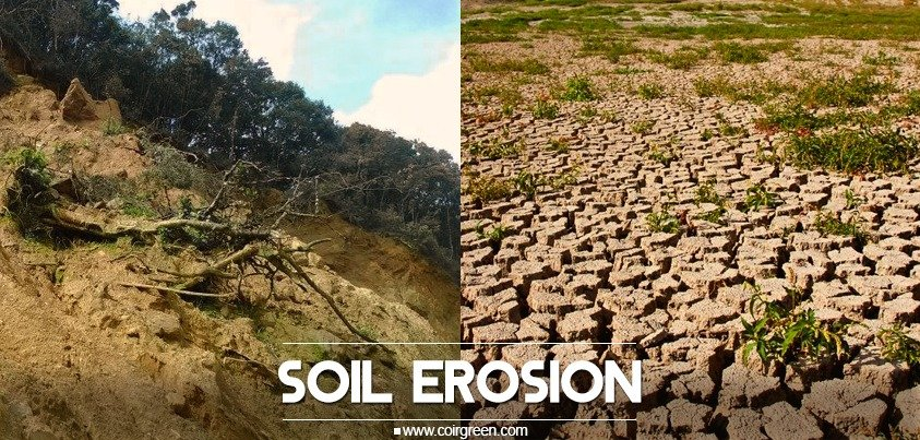 Poor quality soil can lead to harmful impact: Stop erosion now