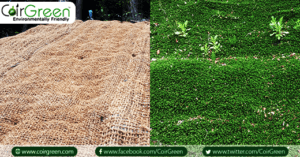 Using Coir Geotextiles for Erosion Control