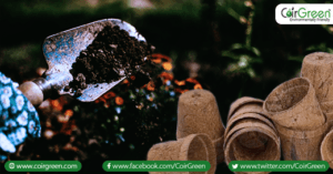 Using coir pots for growing